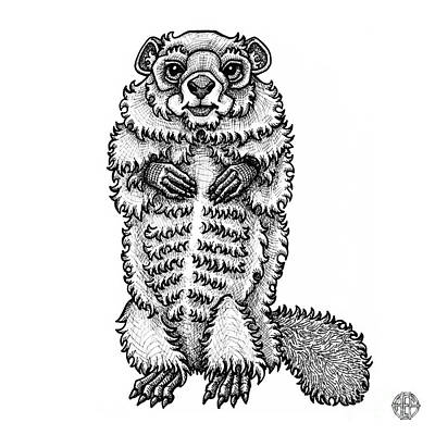 Drawing - Woodchuck by Amy E Fraser
