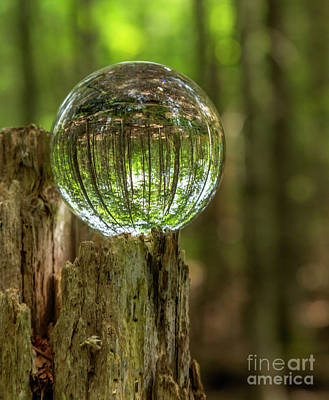 Photograph - Wooded Reflections by Karin Pinkham