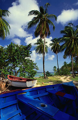Trinidad And Tobago Wall Art - Photograph - Wooden Fishing Boats Among Palm Trees by Michael Lawrence