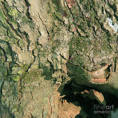 Photograph - Woodland 137 by Amy E Fraser