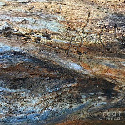 Photograph - Woodland 21 by Amy E Fraser