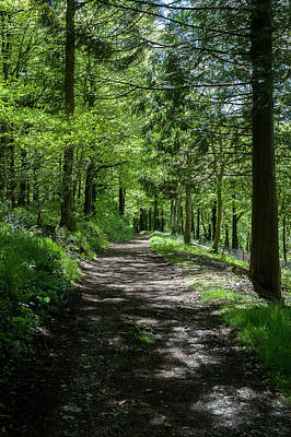 Photograph - Woodland Pathway II by Helen Northcott