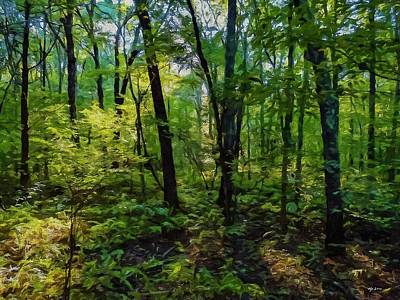 woods at Pigeon Swamp, CT Original