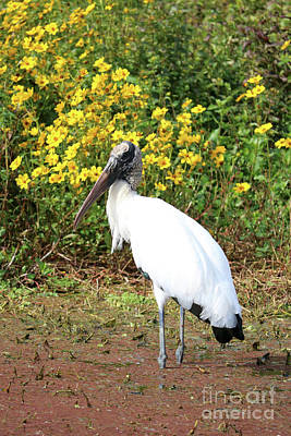 Photograph - Woodstork And Wildflowers by Carol Groenen