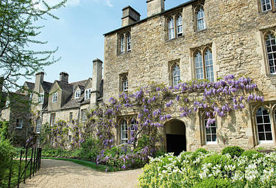 Photograph - Worcester College Wisteria Oxford by Tim Gainey