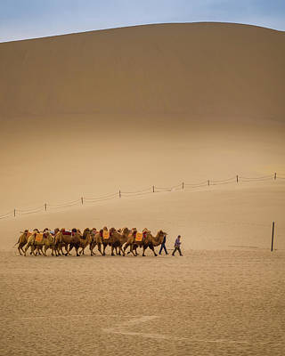 Photograph - Working Camels Dunhuang Gansu China by Adam Rainoff