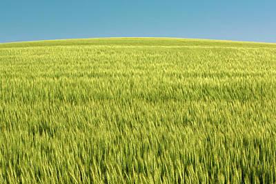 Photograph - World Of Wheat by Todd Klassy