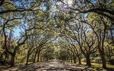 Photograph - Wormsloe Oaks by Framing Places