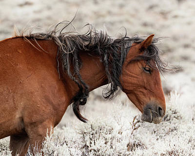 Photograph - Wyoming Hair, Don't Care by Mary Hone