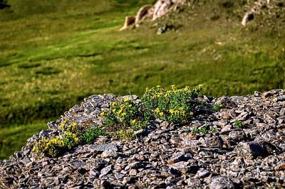 Photograph - Wyoming Spring Flowers by Jon Burch Photography