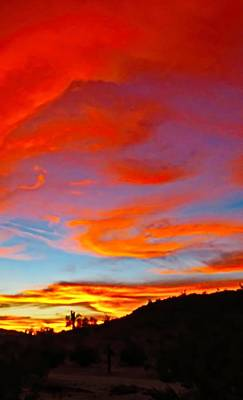 Photograph - Y Cactus Winter Sunset - Vivid by Judy Kennedy