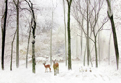 Photograph - Forest Winter Visitors by Jessica Jenney