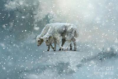 Yaks Calves In A Snowstorm Art Print