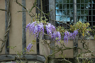Photograph - Ye Olde Wisteria  by Tim Gainey