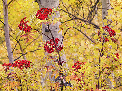 Photograph - Yellow And Red by Leland D Howard