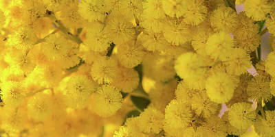 Photograph - Yellow Blooms by Mark Shoolery