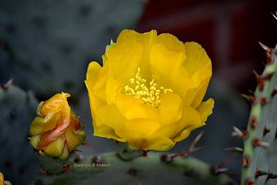 Wall Art - Photograph - Yellow Cactus Blossom by Carolyn Hebert