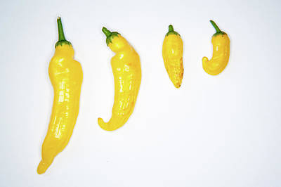 Photograph - Yellow Chillies Lined Up II by Helen Northcott