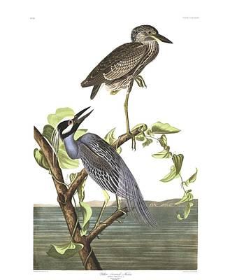 Winter Animals - Yellow-Crowned Heron by John Audubon by John Audubon