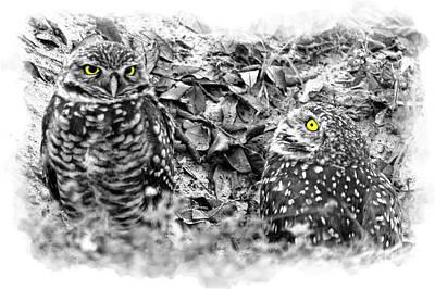Photograph - Yellow Eyes by Dan Friend