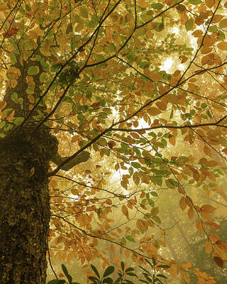Yellow Fall Leaves - Blue Ridge Parkway Art Print