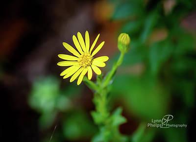 The Beatles - Yellow Flower by Lynn Phelps