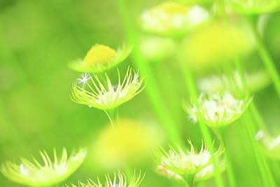 Botanical Photograph - Yellow Flowers In  Botanical Garden by Kiyoshi Noguchi