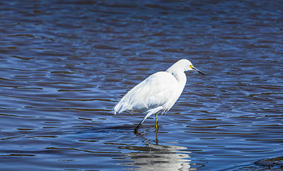 Photograph - Yellow Foot Snowy Egret  by Gene Parks