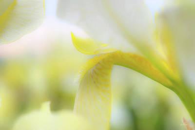 Photograph - Yellow Iris 1 by Leland D Howard