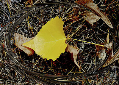 Photograph - Yellow Leaf In Pine Needles by Kae Cheatham