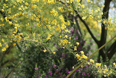 Photograph - Yellow Palo Verde Blossoms On Purple Texas Ranger Flowers In Background by Colleen Cornelius