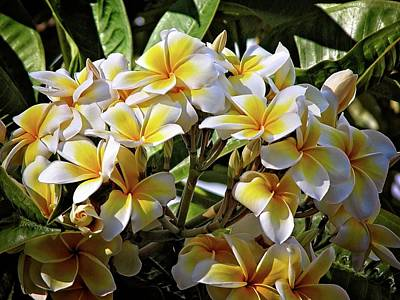Photograph - Yellow Plumeria In Hawaii by Lynn Bauer