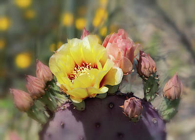 Photograph - Yellow Prickly Bloom  by Saija Lehtonen