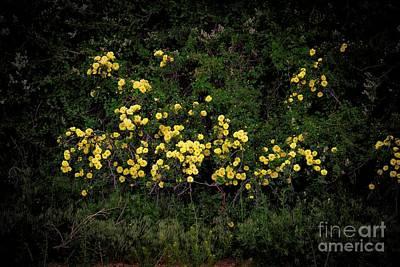 Photograph - Yellow Rose Of Taos by Jon Burch Photography