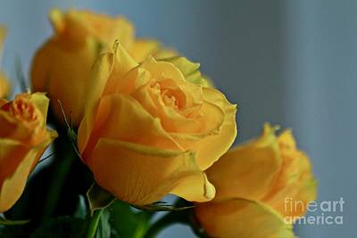 Photograph - Yellow Roses by Ann E Robson