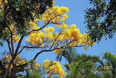 Photograph - Yellow Shower Tree - Hawaii by D Davila