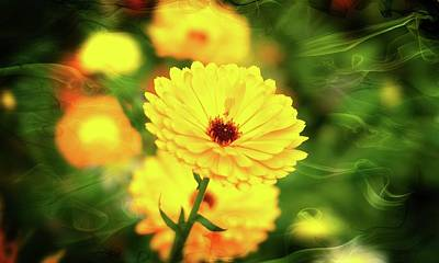 Photograph - Yellow Summer Flower by Pete Hunt