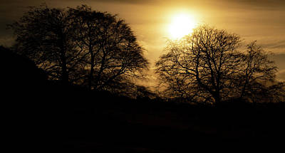 Photograph - Yellow Sun Over Dark Trees by Scott Lyons