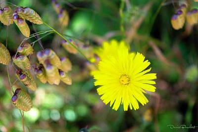 Photograph - Yellow Sunshine by Denise Barnhart