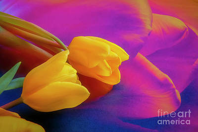 Royalty-Free and Rights-Managed Images - Yellow Tulips 2 by Veikko Suikkanen