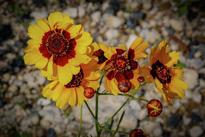 Photograph - Yellow Wildflowers by Lora J Wilson