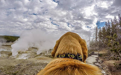 Art Print featuring the photograph Yellowstone By Photo Dog Jackson by Matthew Irvin