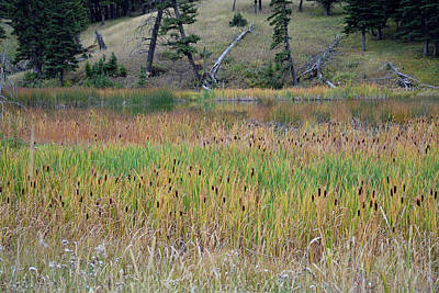 Photograph - Yellowstone Cattails 02 by Bruce Gourley