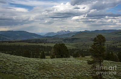 Photograph - Yellowstone National Park by Mae Wertz