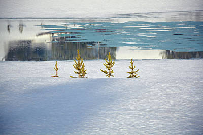 Photograph - Yellowstone's Divide Lake And Lodgepole Saplings by Bruce Gourley