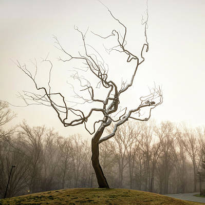 Bath Time - Yield Tree in the Fog - Northwest Arkansas by Gregory Ballos