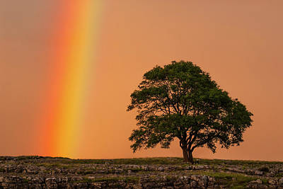 Photograph - Yorkshire Dales Rainbow by David Ross