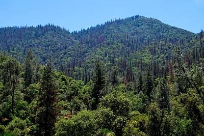 Photograph - Yosemite Green Forest View by Matt Harang