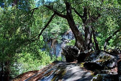 Photograph - Yosemite Moss Tree by Matt Harang