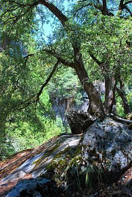Photograph - Yosemite Moss Tree Vertical by Matt Harang